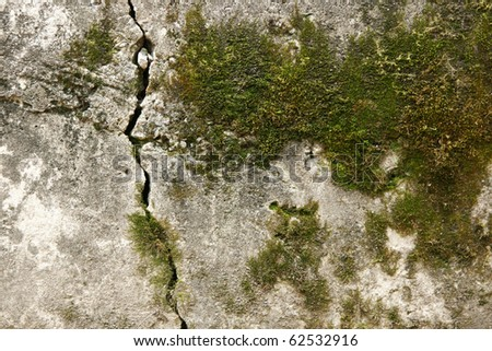old wall with moss - stock photo