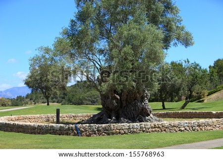 Old walled tree stump sprouting new foliage enclosed within a low circular stone wall on manicured lawns on a golf course or park