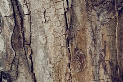 Old walnut tree trunk detail texture as natural background.