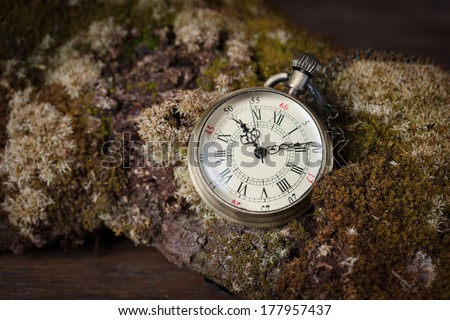 Old watch on  old tree with moss.