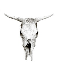Old weathered cow skull isolated on white background.