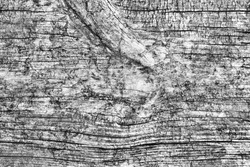 Old Weathered Rotten Cracked Knotted Wood Coarse Gray Grunge Texture