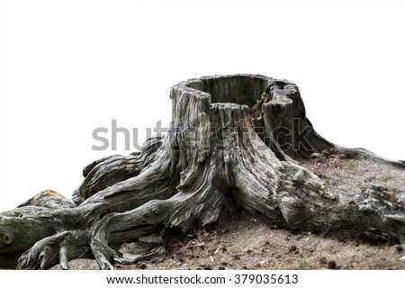 old weathered tree stump with...
