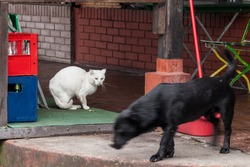 Old white stray cat looking with an angry look at a stray lutalica black dog passing by with a speed blur, ready to fight due to the opposition of cats and dogs.
