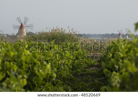 old windmill and wineyard on sicily