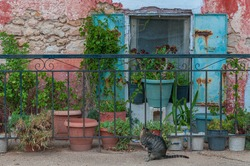 Old window of typical building with plants and a cat, Zakynthos island, Greece