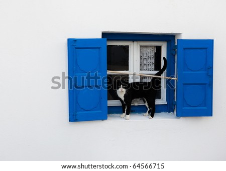 Old window with blue shutters and a cat. Background.