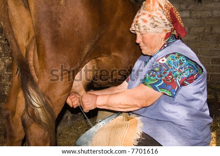 Cows Farm Milking Women