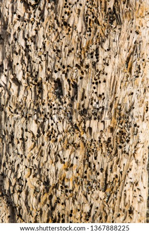 Old wood background.  Drift wood Texture #1367888225