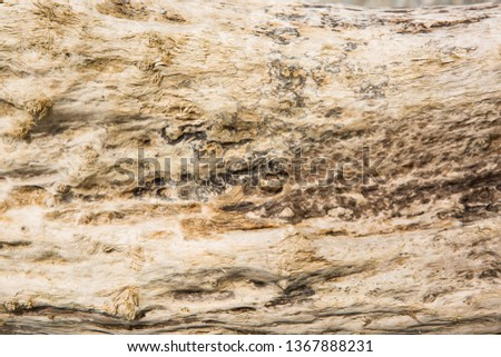 Old wood background.  Drift wood Texture #1367888231