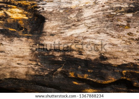 Old wood background.  Drift wood Texture #1367888234