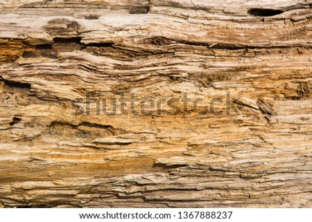 Old wood background.  Drift wood Texture #1367888237