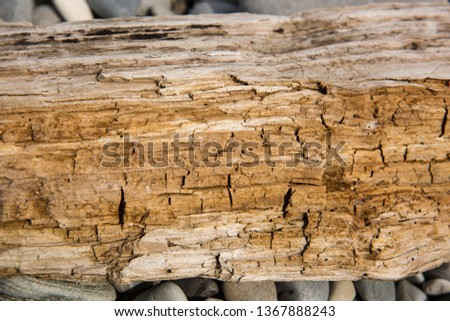 Old wood background.  Drift wood Texture #1367888243