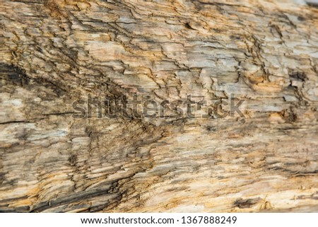 Old wood background.  Drift wood Texture #1367888249
