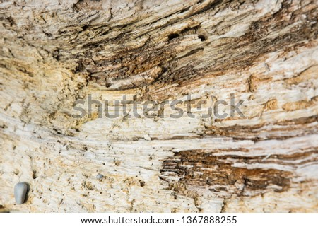 Old wood background.  Drift wood Texture #1367888255