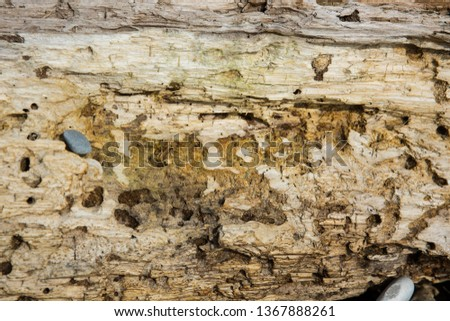 Old wood background.  Drift wood Texture #1367888261