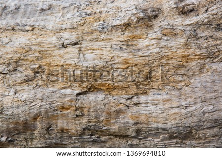 Old wood background.  Drift wood Texture #1369694810
