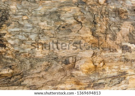 Old wood background.  Drift wood Texture #1369694813