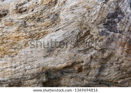 Old wood background.  Drift wood Texture #1369694816