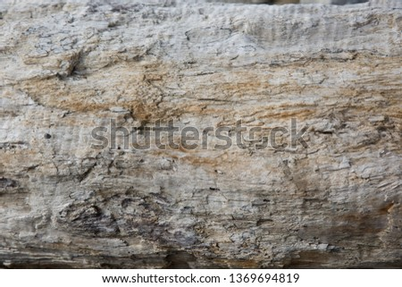 Old wood background.  Drift wood Texture #1369694819