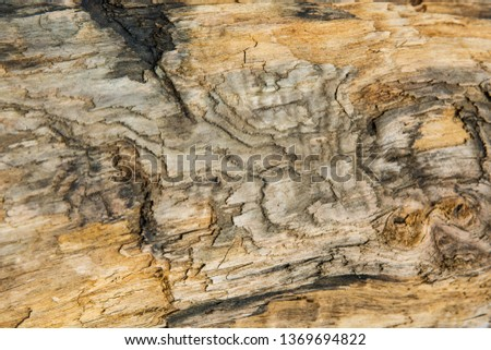 Old wood background.  Drift wood Texture #1369694822
