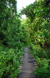 Old wood bridge to the jungle, forest, Krabi,Thailand