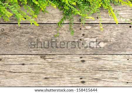 Old wood floor and the top branches of leaves. For background.