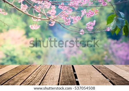 Old wood floor with pink  Sakura flowers blooming blossom blurred background