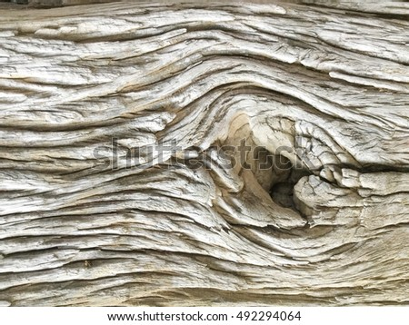 Old Wood texture,Bark texture for the background or text. #492294064