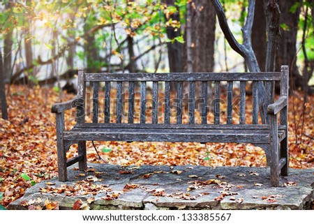 Old Wooden Bench In Arboretum Park With Autumn Foliage And