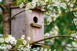 Old wooden birdhouse on a cherry tree in the farm park zone. Simple birdhouse design. Shelter for bird breeding, nesting box on a tree