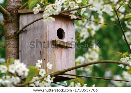 Old wooden birdhouse on a cherry tree in the farm park zone. Simple birdhouse design. Shelter for bird breeding, nesting box on a tree Stockfoto ©