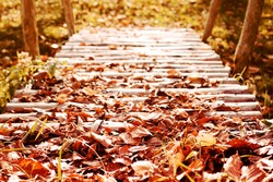 Old wooden bridge from logs in autumn bright fallen leaves, autumn road through the bridge.
