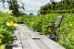 Old wooden chair in the flower garden (Cosmos flowers) outdoors in the green garden