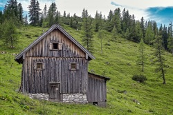 Old wooden cowshed on green pasture, Neustattalm, Dachstein, Austria. Idyllic scene with cows and trees.