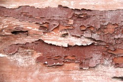Old wooden fence with peeling brown paint/Background of old painted wood fragment