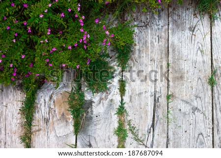 Old wooden footpath with grass and flowers #187687094