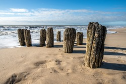 Old wooden groyne in the North Sea.