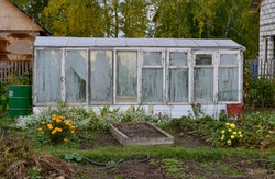 Old wooden homemade greenhouse from the windows in the garden