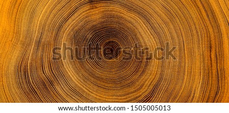 Photo of  Old wooden oak tree cut surface. Detailed warm dark brown and orange tones of a felled tree trunk or stump. Rough organic texture of tree rings with close up of end grain.
