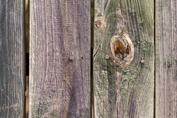 Old wooden planks with peeling green paint. The texture of a weathered wooden fence. Abstract multitasking background. Selective focus.