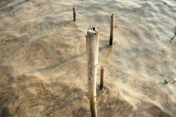 old wooden posts, wooden sticks in brown sea water