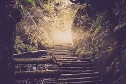 old wooden staircase throught the deep forest with sunlight at the end. natural vintage background