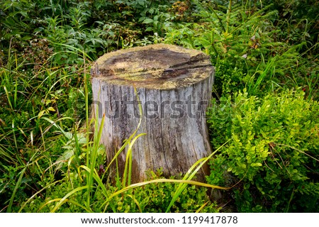 old wooden stump among green grass #1199417878