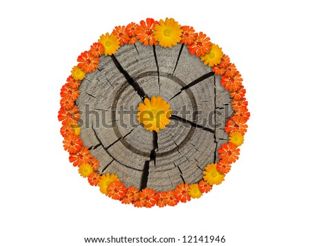 old wooden target & flowers