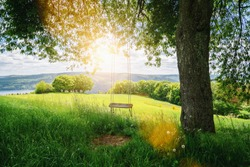 Old wooden vintage swing hanging from a large tree on green grass background, in golden evening sunlight