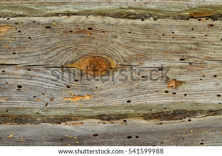 Old wooden wall eaten by bark beetle. Aged wood texture