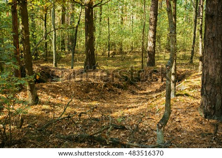 Old World War Trenches In Forest Since Second World War In Belarus Stock photo ©