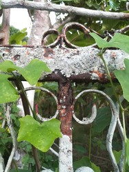 Old Wrought iron fence.There is a bunch of vines covered.rust corrosion