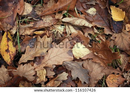 old yellow fallen autumn leaves background #116107426